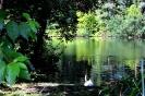 Schloßsee mit Schwan