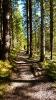 Gabriela auf dem wunderschönen Wald-Wanderweg